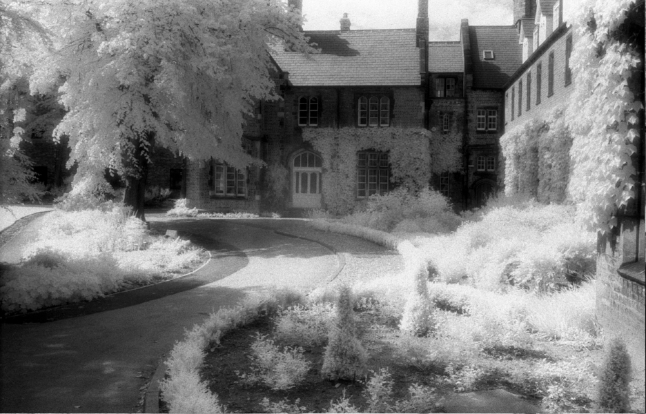 Infrared picture of a building and plants. There are plants growing on the building.